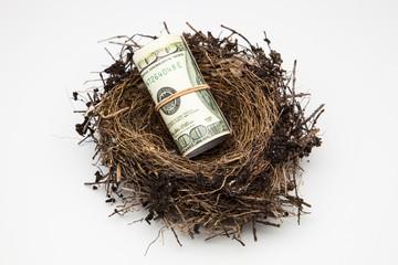 nido de ave con billetes