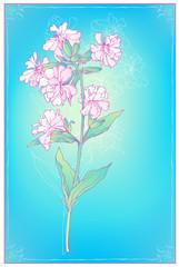 Delicate decorative flower . Vector illustration.