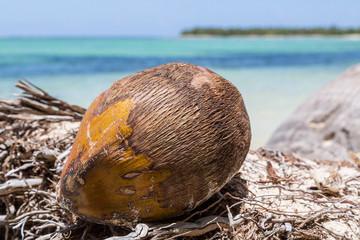 eine Kokosnuss liegt am Strand