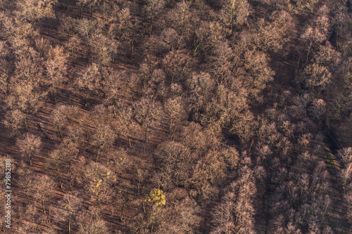 Foto op Canvas Natuur aerial view of the forest