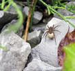 Wolf spider - 79853986