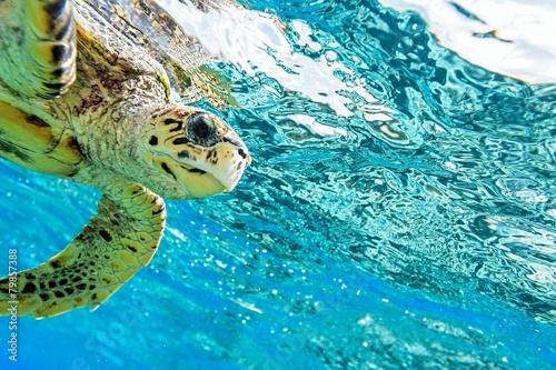 Poster sea turtle