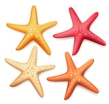 Realistic Colorful Starfish Set in White Background