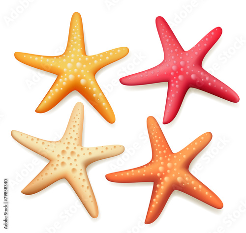 Fototapeta Realistic Colorful Starfish Set in White Background