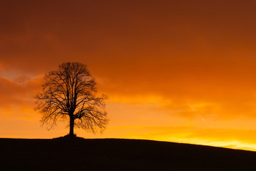 Lonely tree on the hill at sunrise