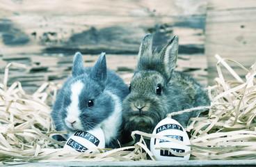 Kaninchen Osterkarte