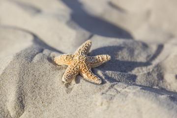 Seestern im Sandstrand