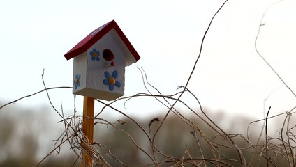 Twigs and happy birdhouse in spring, Luxembourg