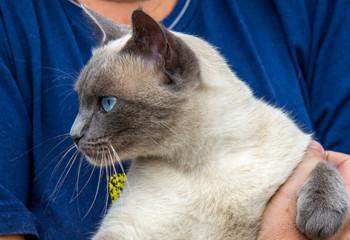 Felino de olho azul