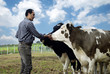 Farmer with cows - 79867976