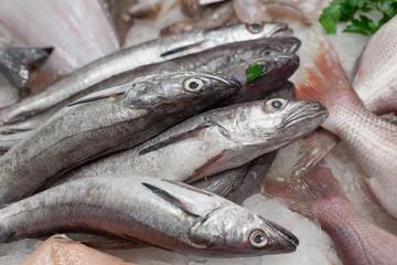 Heap of frozen mackerels for sale at a market, La Boqueria