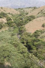 camino entre bosque