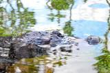 Amphibian Prehistoric Crocodile poster