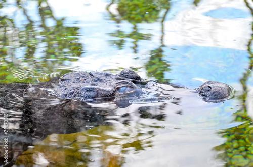 Tuinposter Krokodil Amphibian Prehistoric Crocodile
