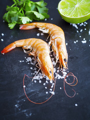 Two Shrimps on Dark Background