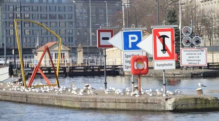 Möwenkolonie an der Mühlendammschleuse in Berlin