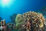 diving in colorful reef underwater