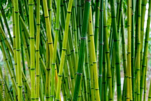 Aluminium China Bamboo forest