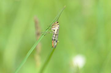 insetto su erba