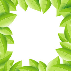 plant leaves background