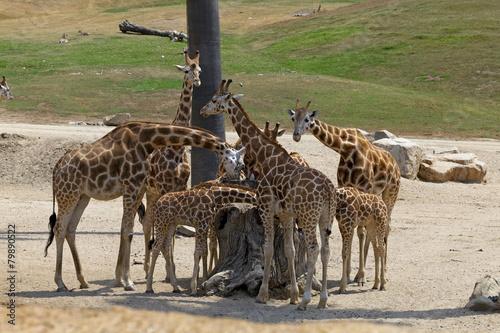 San Diego Zoo - Safari Park