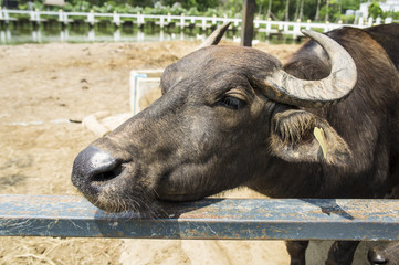 animal farm living feeding fence concept