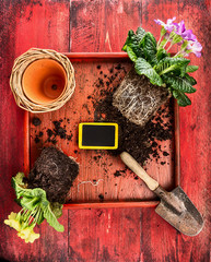 Primula potting with flower pot, scoop,soil and sign
