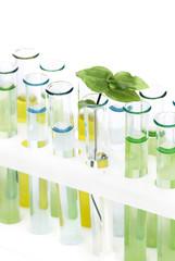 Sprout  in vitro