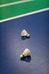 Badminton - badminton courts with two shuttlecocks