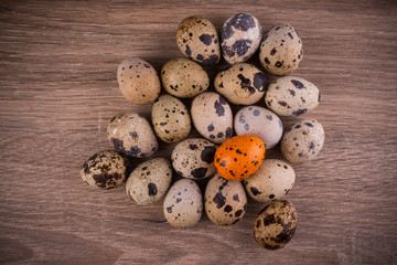 Spotted Quail eggs with one orange egg