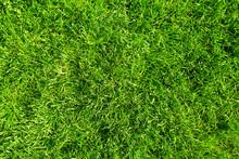 """Постер, картина, фотообои """"Green grass."""""""
