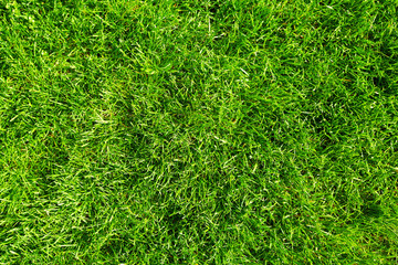 Green grass. © Kurhan