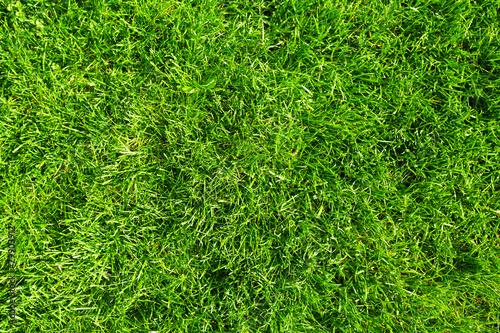 Green grass. - 79903912