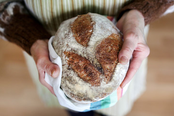 Whole-grain artisan bread loaf in grandmother hands, baking