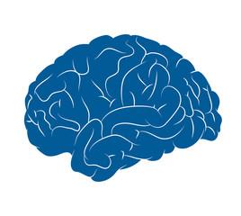 cervello, mente