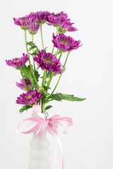 Burgundy daisies in a vase with pink bow
