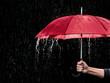 Roter Regenschirm - 79907909