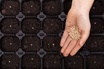 Hand spreading seeds into germination tray