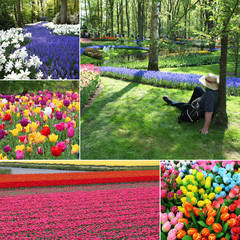 Keukenhof / Netherlands - Land of tulips