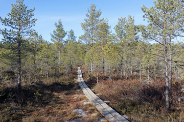 Wooden footpath in Viru bog, Lahemaa National Park, Estonia