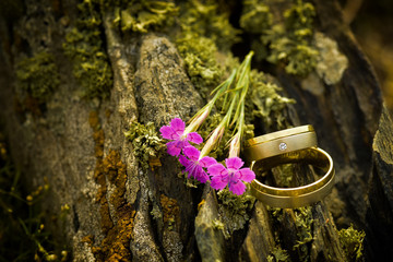 Beautiful engagement rings on tree bark