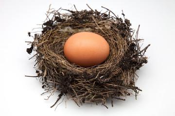 nio de ave y huevo