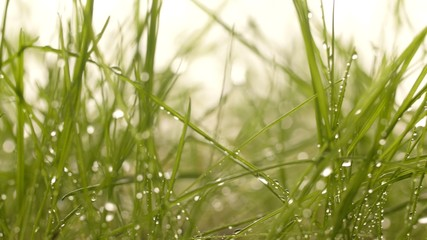 Macro footage of grass with water drops
