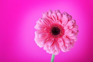 Pink flower on background