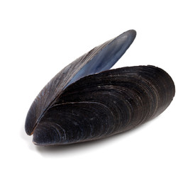 Shell of mussel isolated on white background