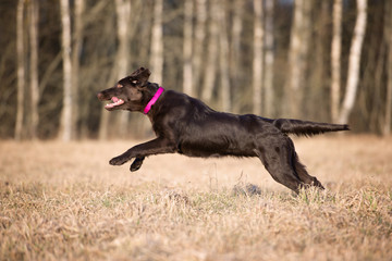 beautiful dog running on a field