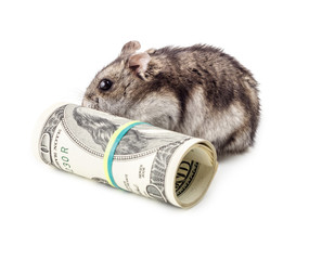 Mouse gnaws money