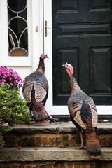 Wild turkeys at front door