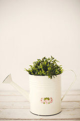 Green plants in retro watering can