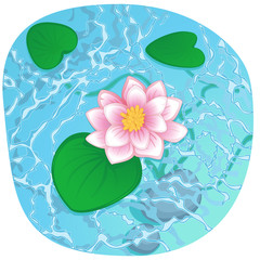 blooming lotus on shining water